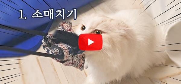 [냥꼬리 19thfloorcats] 냥꼬리네 애교의 하..