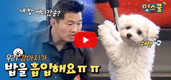 [강형욱의 보듬TV] 밥을 빨리 먹는 강아지 문제행동일..